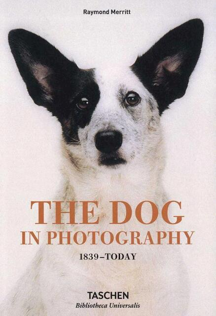 The dog in photography -
