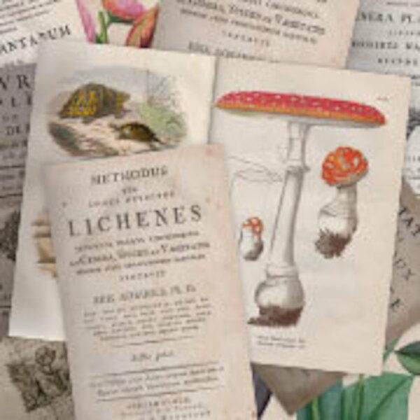 Old & rare: fauna & flora / Natural history